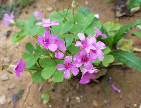 路边的小花